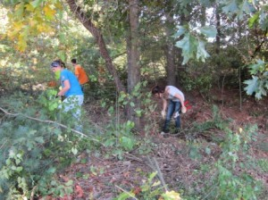 Shelby, Peter and Angelica working on the brush clearing.