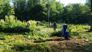 Part of the crew using brush cutters and trimmers to cut the vegetation in the Coxhall Kitchen Garden.