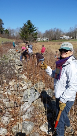 Clearing brush from the wall along the wet meadow. Thanks to Harbour, Alan, Rod, Linda, Reshma, Devon, Doris, Brandon, Janine, Tate, Jason, Dick, Becky, Harrison and Cynthia