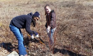 Reshma and Devon hard at work along the edge of the wet meadow cutting back a red maple that re-sprouted last year.