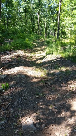 Looking down the recently cleared and brushed trail at the Town Forest Park in North Brookfield