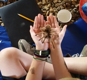 The tarantula visited with many students during the Creature Teacher presentation.