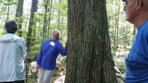 The base of the Witness Tree, a 100 year old red oak that is the central character in Lynda Mapes' book Witness Tree
