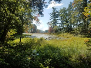 Looking at part of Harvard Pond from the Tom Swamp Road.