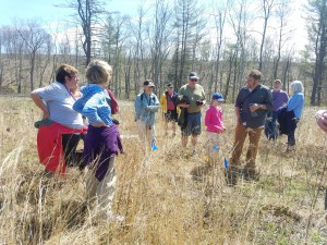 The group looking at native lupine that is re-surging after the habitat treatment.
