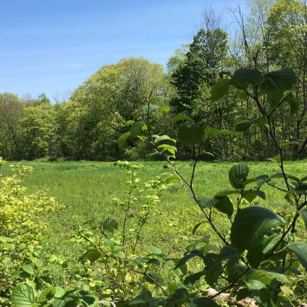 Category 2 - Landscape. Hidden Meadow by Jennifer Mott, taken May 22, 2019 at Mandell Hill