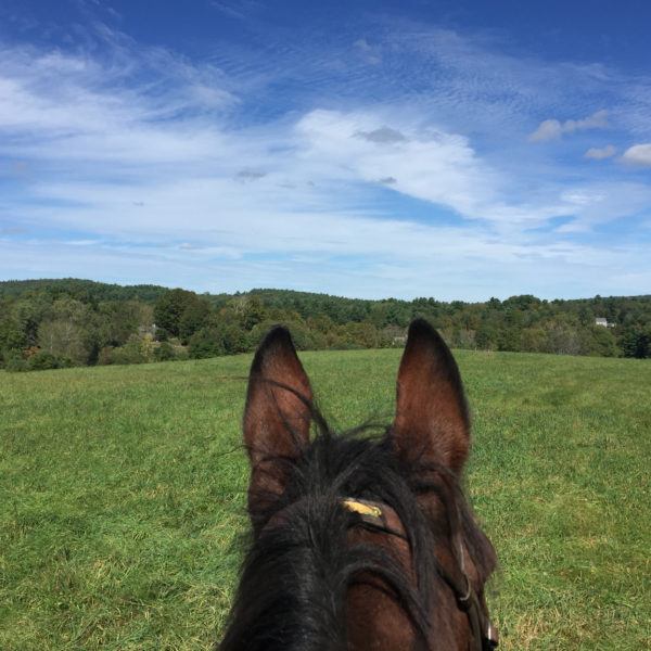 Category 2 - Landscape. I'd Rather Be On Horseback, by Anne Phillips, September 2018 at West Brookfield Wildlife Management Area