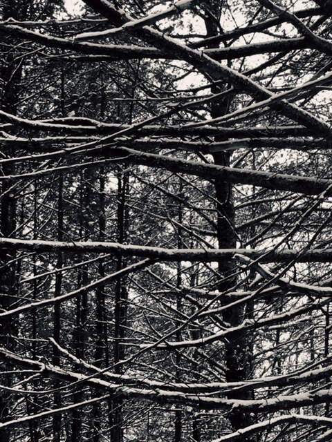 Category 4 - Black and White. Look Up!! Taken by Jennifer Mott on February 18, 2019 at the Mass Central Rail Trail