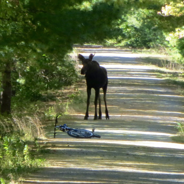 Category 1 - Wildlife. Surprised, taken by Ansley Siter on October 5, 2015 at Mass Central Rail Trail