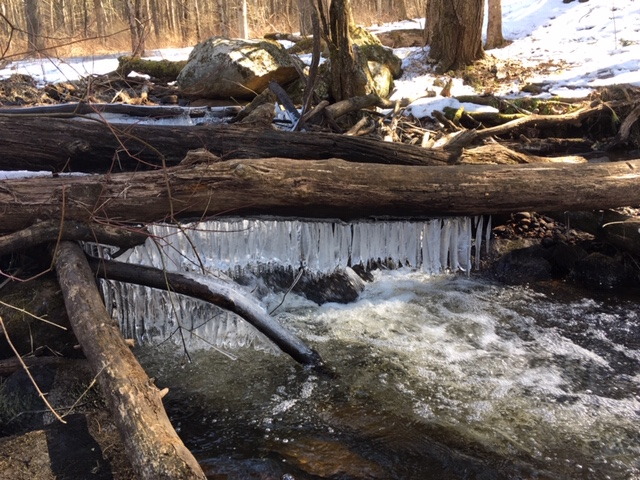 Category 8 - Water. First Sign of Spring, by Jennifer Mott, Pynchon's Grist Mill Preserve, March 2019