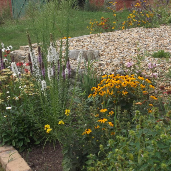 Category 7 - Flowers & Gardens. Pollinator Garden by Becky Ikehara, taken July 29, 2018 at Wendemuth Meadow