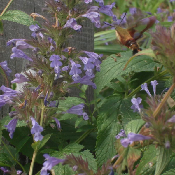 Category 7 - Flowers & Gardens. Busy Insects by Becky Ikehara, taken on July 29 2018 at Wendemuth Meadow