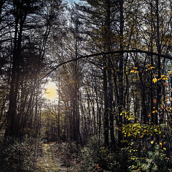 Category 2 - Landscape. Trail Panorama taken by Bob Desilets on October 30, 2018 at the Mass Central Rail Trail.