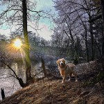 Category 2 - Landscape. Sunrise on the River Banks taken by Bob Desilets on January 6, 2019 at the Cernauskas Preserve