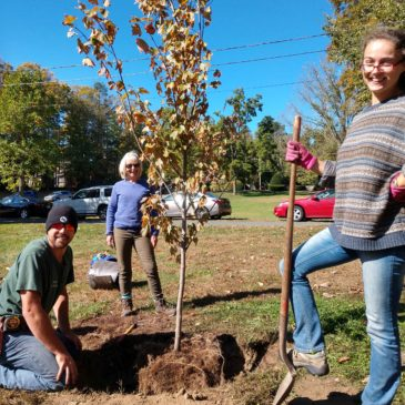 Planting Trees in Grenville Park