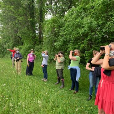 Annual Bird Monitoring