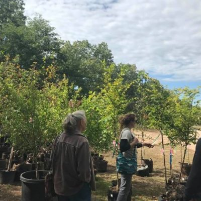 Checking out the tree nursery in Holyoke with Alia Abaid, our arborist for the tree planting grant, and Rachel Dematte from the DCR (Department of Conservation and Recreation) who gave us this day tour in Holyoke, MA with Greening the Gateway Cities Program.