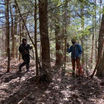 Trail Underway at Henry's Grove in Hubbardston