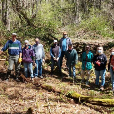 Invasive Plant Removal at Pynchon's Grist Mill